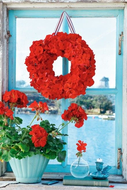 red geraniums by an aqua blue window