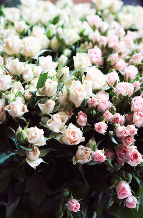 Roses!! #flowers #roses