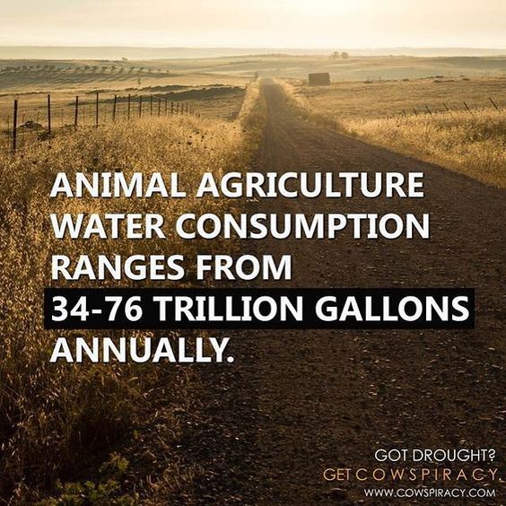 """Got #drought? Get #Cowspiracy  www.cowspiracy.com  SOURCE: SOURCE: """"Water Resources: Agricultural And Environmental Issues."""" BioScience 54, no. 10 (2004): 909-18."""