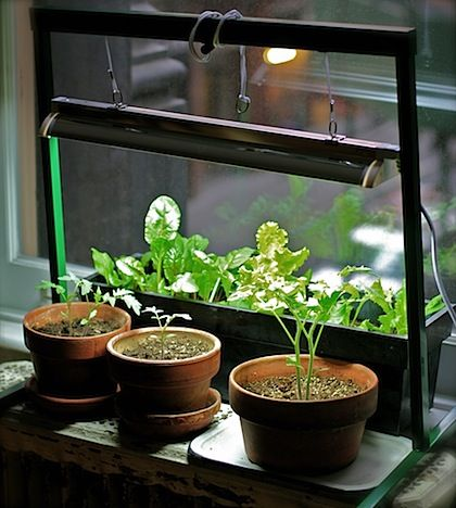 Indoor indoor herbs and grow lights on pinterest for Indoor gardening nyc