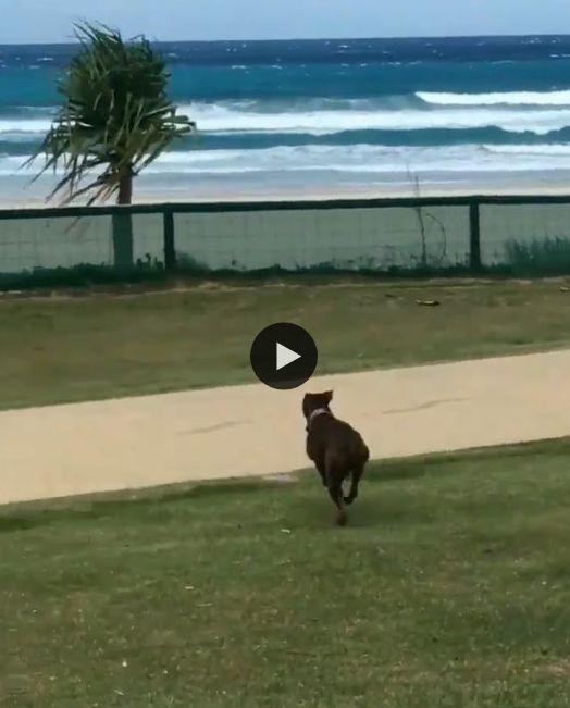Cachorro se empolga de mais na praia.