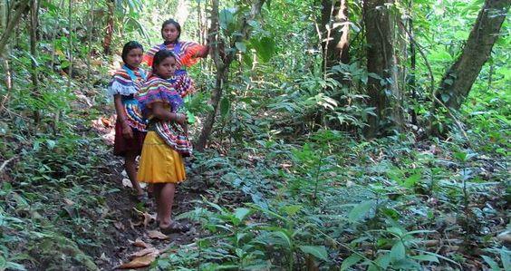 Carta de la comunidad Selva Lacandona . http://insurgenciamagisterial.com/carta-de-la-comunidad-selva-lacandona/