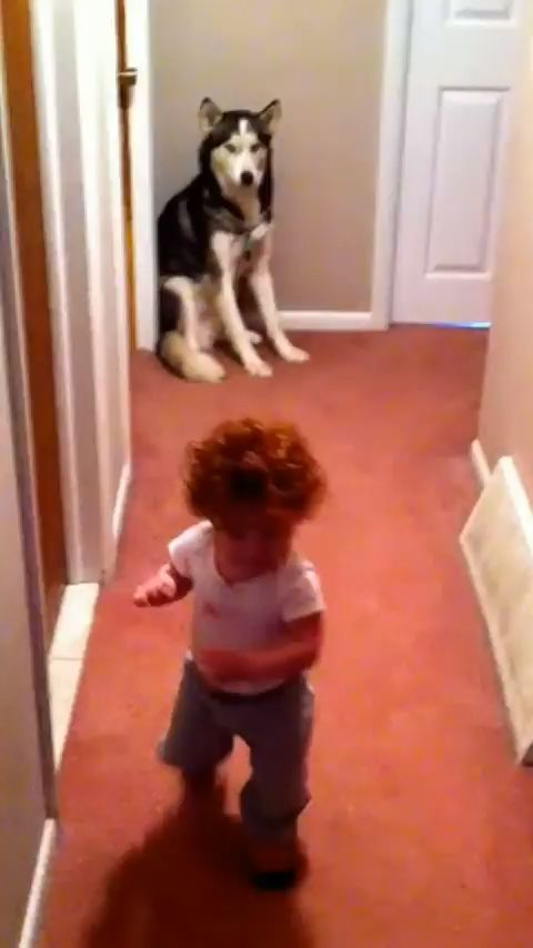 Pin By Anuka On Puppers Funny Animal Videos Cute Baby Animals