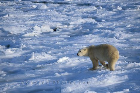 printable pictures of tundra in canada | Image - Tundra-climate.jpg - Uncyclopedia, the content-free ...