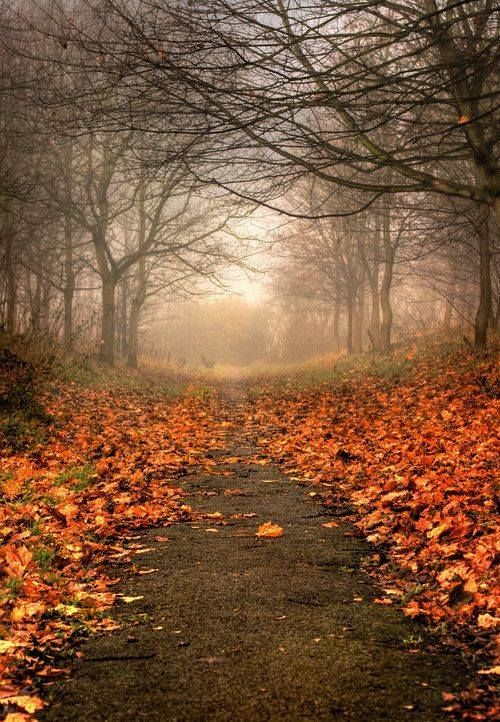 Autumn path with bare trees and fallen leaves.