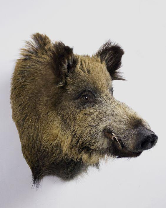 Amazing ANIMALS BOAR PAINTINGS Szukaj w Google ANIMALS BOAR Pinterest Animal