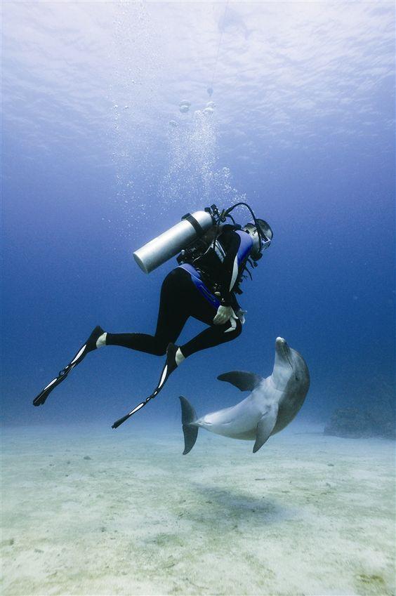 ダイバーと戯れるイルカ