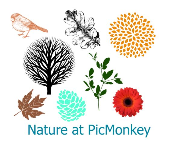 Get a lot of natural elements by using PicMonkey - www.blogguidebook.com #picmonkey #pinyourlove