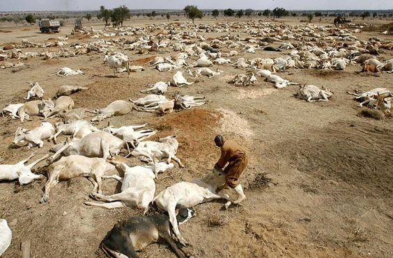 African Famine, Drought, and Livestock Death