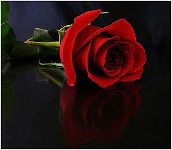 pasion por las rosas - Community - Google+