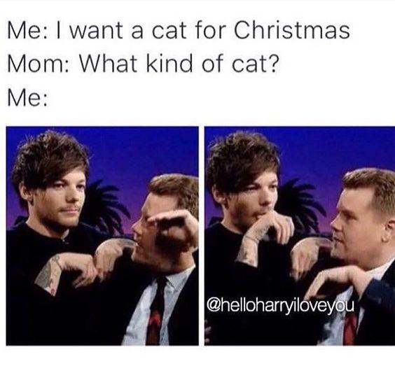 A Louis Cat