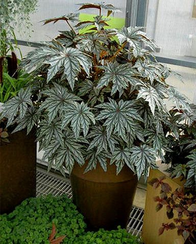 Can I overwinter my plant?  --  guide & how-tos