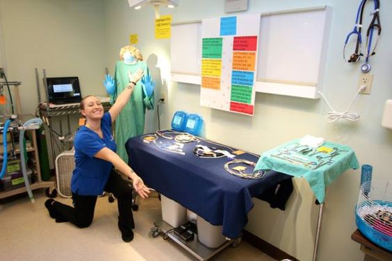 She's super Sarah. She made our operating room an amazing and fun room that educated our guests at the open house. Great job!