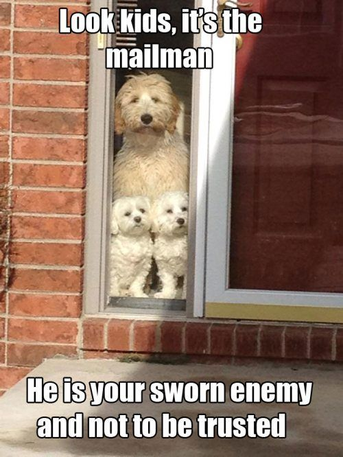 Enemies pictures and chang 39 e 3 on pinterest - Funny animal pictures with words ...