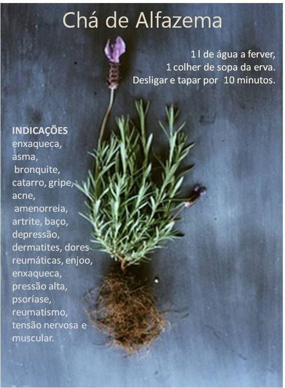 Chá de alfazema, bom para as enxaquecas depressão, acne, bronquite, asma....