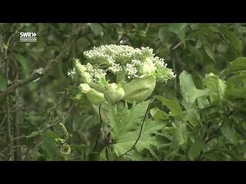 Doku Garten Der Zukunft Doku Garten Der Zukunft Youtube 1 Wenn Sie Eine Gartenlandschaft Entwerfen Sollten Sie In Der L Der Landsc Herbs Plants Farm