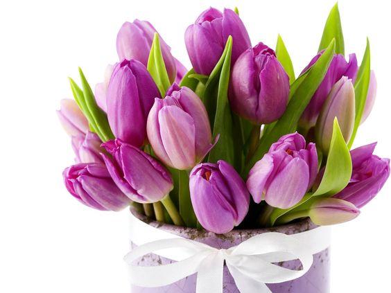 Purple tulips - Paarse tulpen