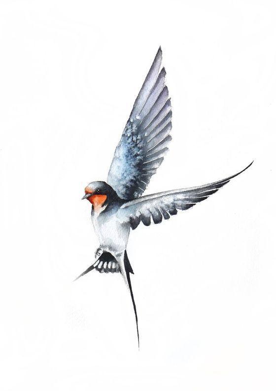 Vol Hirondelle Ii La Faune Les Oiseaux Et La Nature Birds