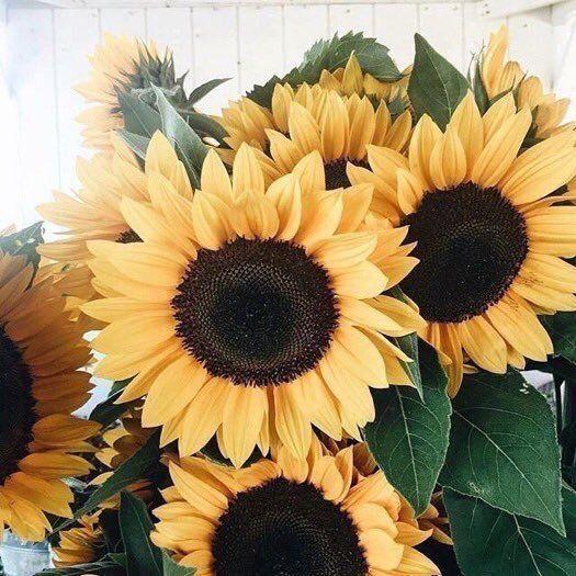 Sunflowers On Liebe Blumen Pflanzen Schone Blumen