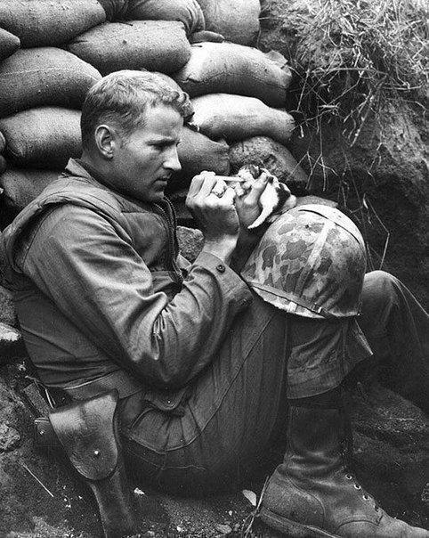Сержант морской пехоты Фрэнк Прейтор с помощью пипетки кормит молоком маленького котенка, мама которого погибла от мины. 1953 г., Корея.