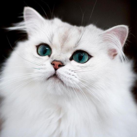 Pin By E Cross On Cat Emoji Cat Emoji Cats Cats Of Instagram
