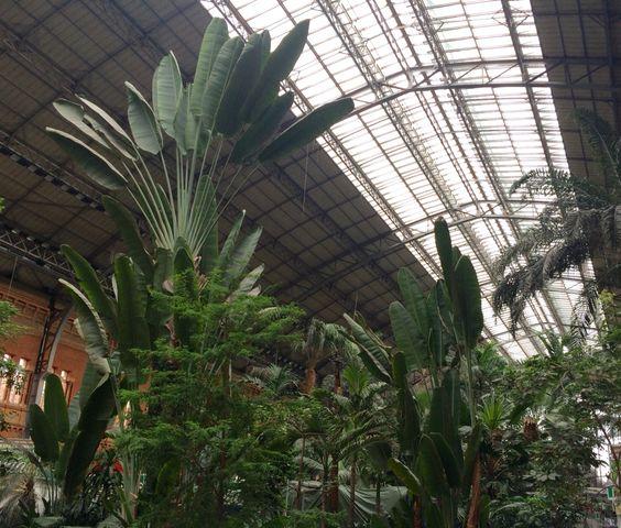 Jardín Tropical de la estación puerta de Atocha ( Madrid España)