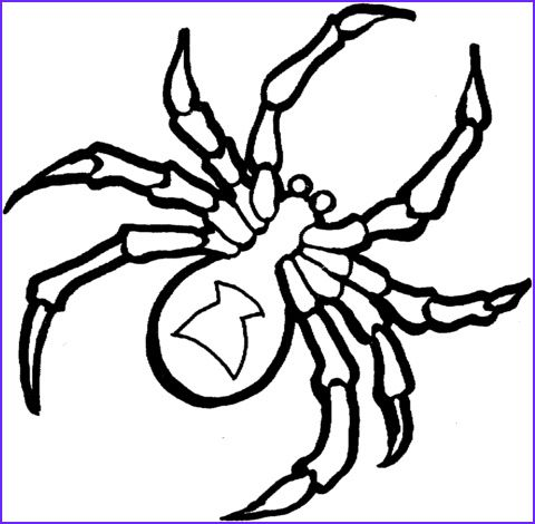 Black Widow Spider Coloring Page Spider Coloring Page Coloring Pages Coloring Pages For Teenagers