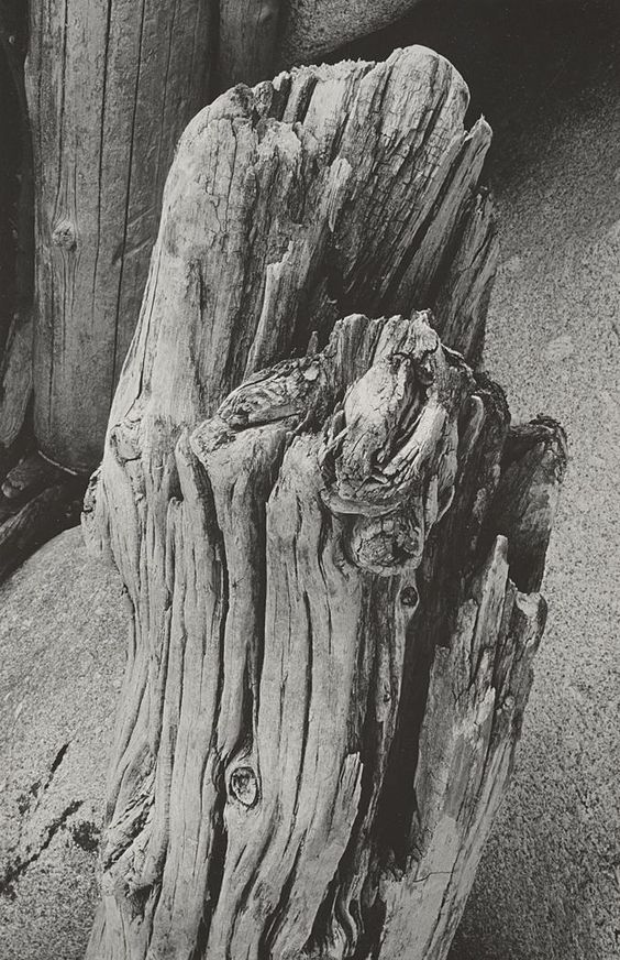 Driftwood, San Francisco (ca. 1931)