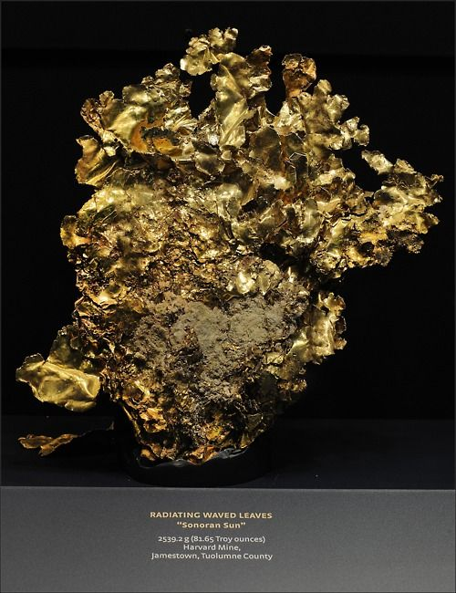 This gold specimen (in the Museum's Guggenheim Hall of Minerals) crystallized in veins of quartz found in the foothills of California's Sierra Nevada. Over 150 million years ago, magma was pushed towards Earth's surface. As the magma solidified, it drove superheated, gold-bearing water into cracks in the overlying rock, which solidified into veins of quartz and gold.    Photo (c) AMNH/R. Mickens  http://www.amnh.org/