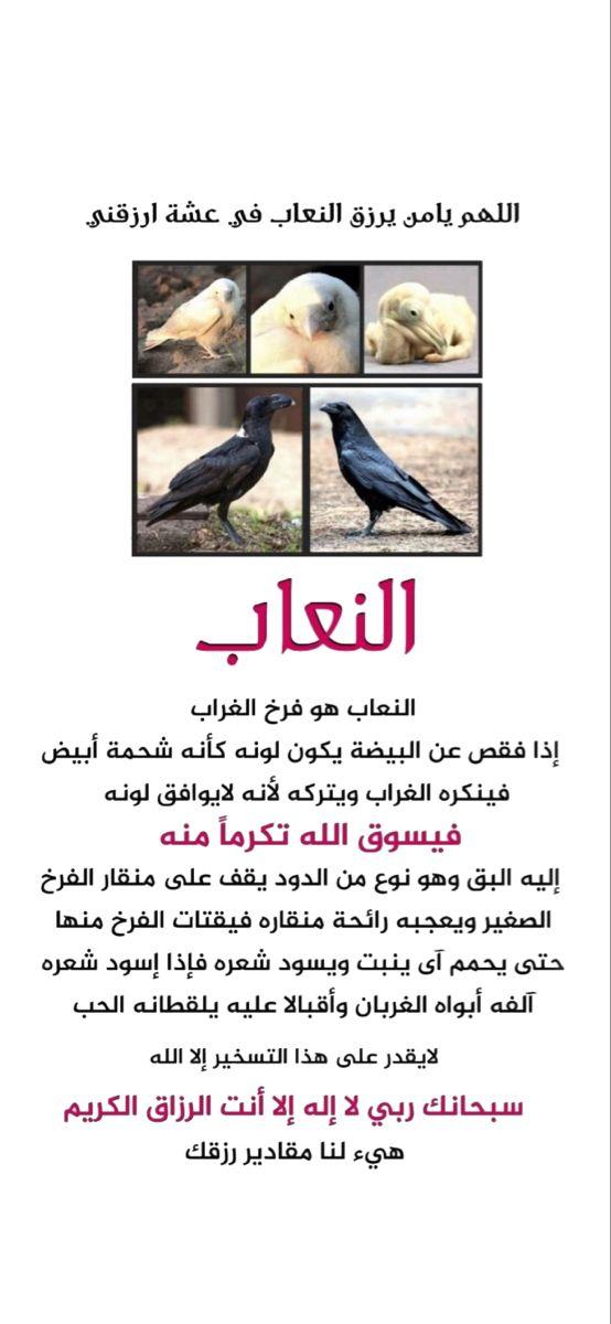 السعوديه الخليج رمضان الشرق الأوسط سناب كويت فايروس كورونا تصميم شعار لوقو دعاء Snapchat Ads Ugs