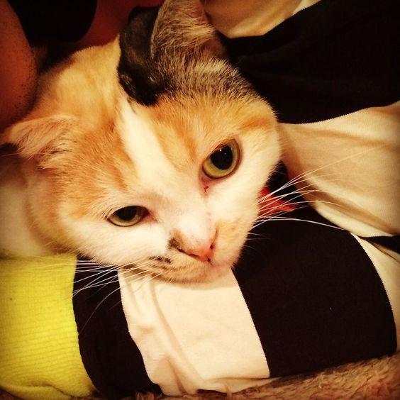 寝てるにあを抱きしめたら迷惑な表情 #猫 #ねこ #ネコ #ねこ部 #ネコ部 #cat #cats #instacat #instacats #instagood #catstagram #kitten #kitty #kittens #pet #pets #animal #petstagram #catsofinstagram #ilovemycat #instagramcats #catoftheday #lovecats #furry #sleeping #adorable #catlover #meow by tk1118yz