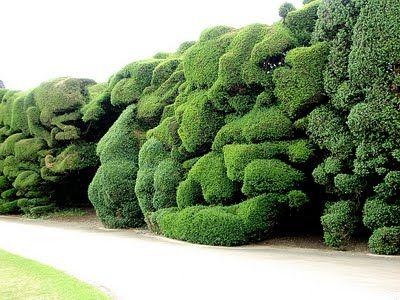 really nice hedge