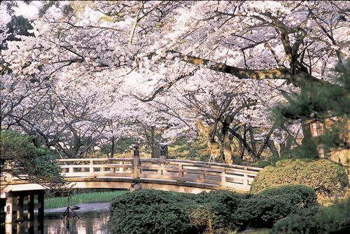 japanese cherry blossom garden bridge and cherry blossom japanese garden japanese gardens pinterest blossom garden cherry blossoms and bridge