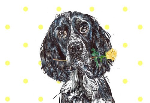 Single Large Luxury Springer Spaniel Dog Sympathy//Greeting Card