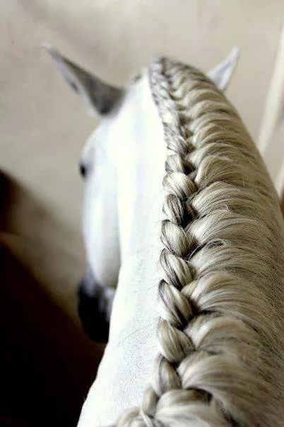 Super mooi en strak!!!!       #loveee #vlechten #paarden #paard #pony's #pony #hengstenvlecht