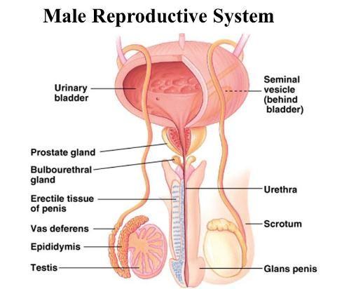 prostatitis des eies and go away on its own