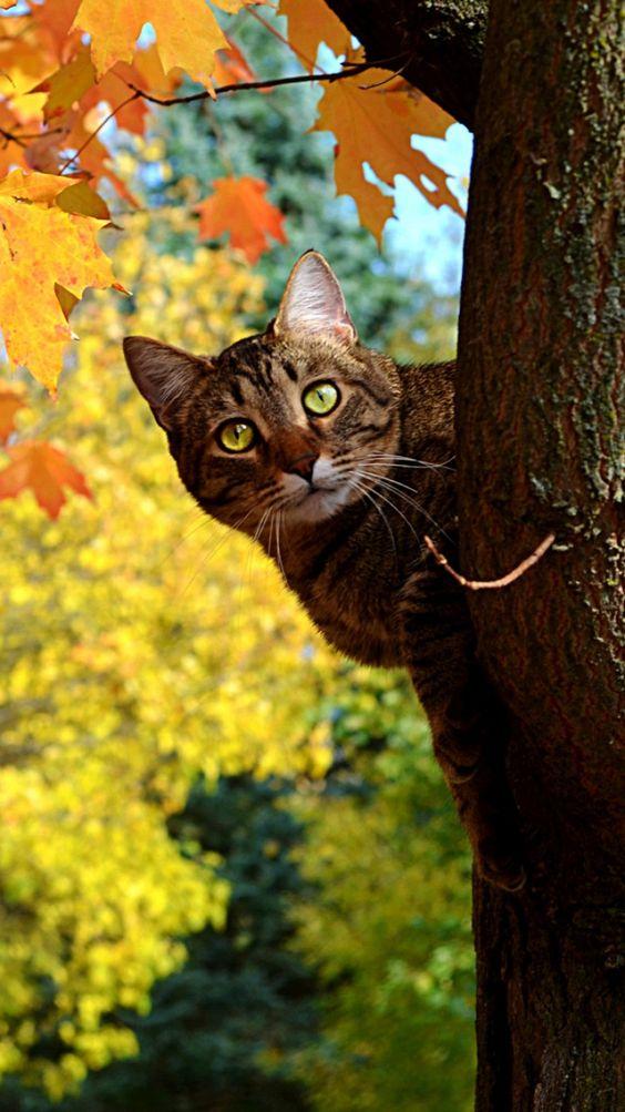 HELLO ;-))))))  #cute #cat #tree  ♥♥♥♥