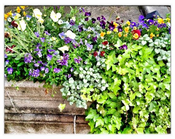 100 Container Garden Ideas For Arkansas, Texas, Tennessee and The South