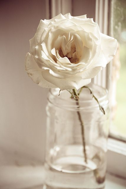soft and dreamy single rose... opposed to a bouquet... for the bride, and maid of honor...