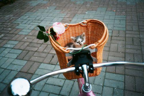 bike ride with a kitten in a basket!<3