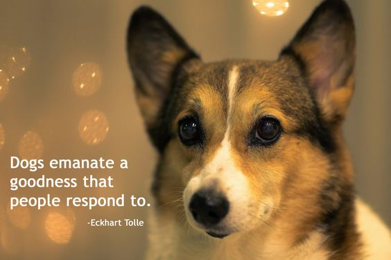 Dogs Emanate A Goodness That People Respond To.   Eckhart Tolle | Dog  Quotes | Pinterest | Eckhart Tolle