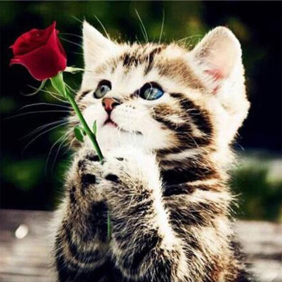 9 Ways To Show Your Cat Love On Valentine S Day Cattime Kittens Cutest Kitten Wallpaper Kitten Pictures