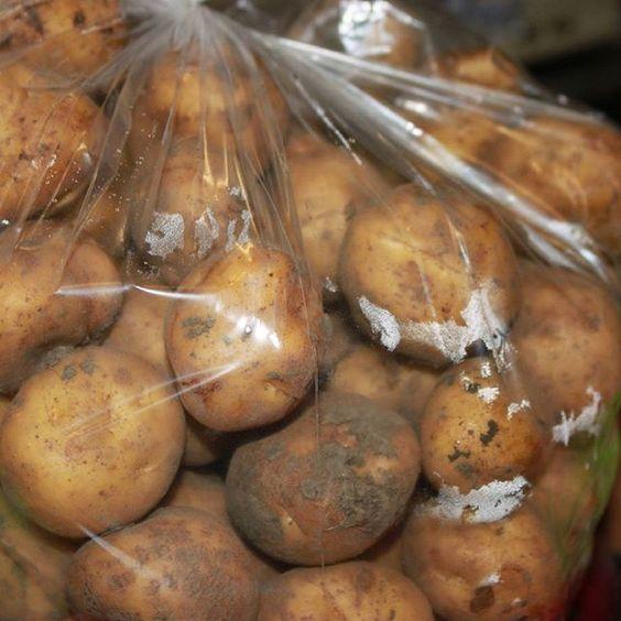 #opperdoezerronde uit #opperdoes Wat is er niet goed aan deze foto? #NL #aardappelen #bewaren