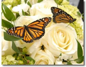 Butterflies and Brides are a perfect match!