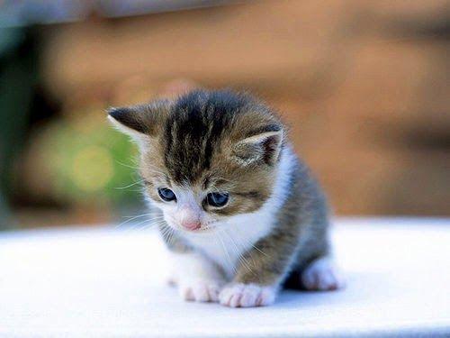 New Born kitten