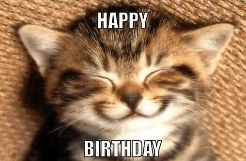 Happy Birthday Cat Meme Happy Birthday Funny Cats Cat Birthday Memes Kittens Cutest