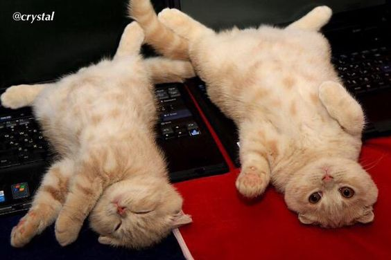 We has had a long day   #kittyloafmonday #tunatuesday