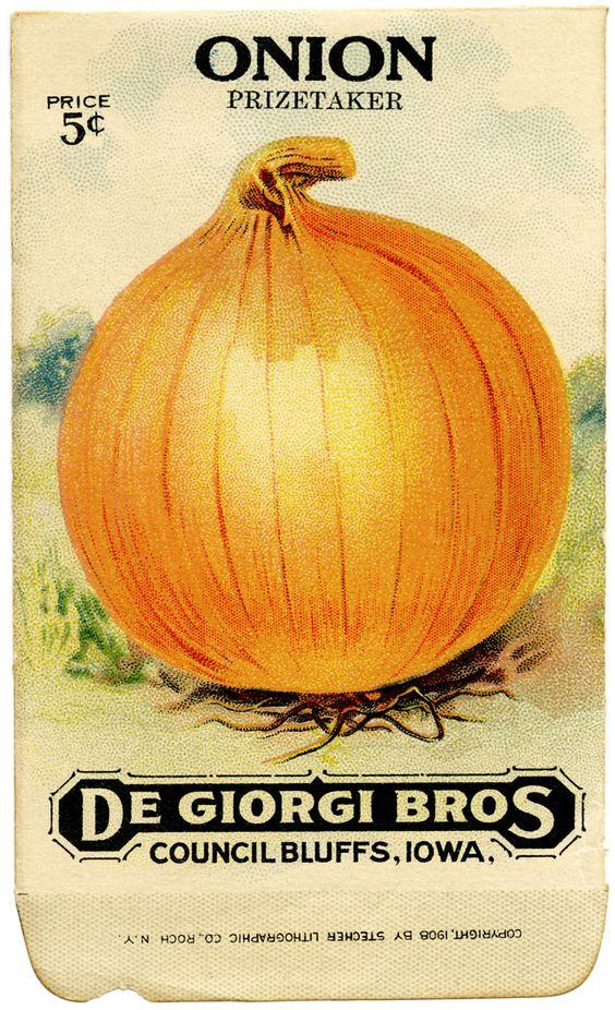 vintage seed packet - onion