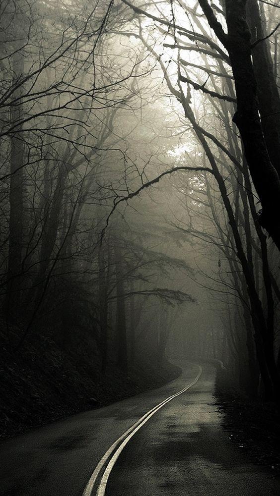 Estrada com árvores fechadas preta e branca.