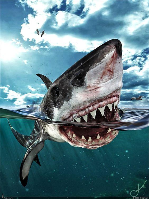 恐怖・かっこいい・巨大!ホホジロザメのイラスト・壁紙・高画質画像まとめ!